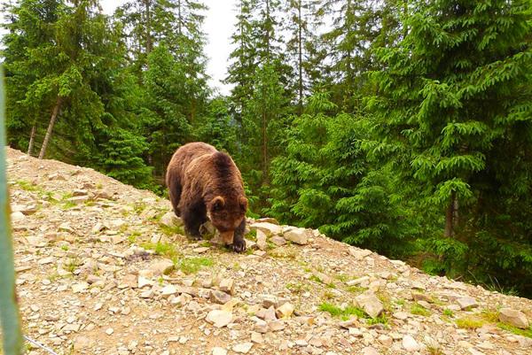 Картинки по запросу реабілітаційний центр для ведмедів