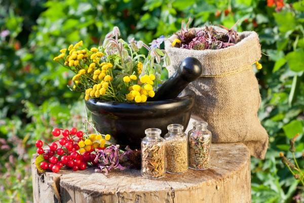 Календарь сбора лекарственных растений в Карпатах